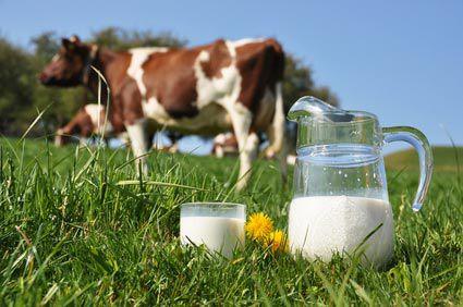 le lait de bovin est il bon ou mauvais pour la sant. Black Bedroom Furniture Sets. Home Design Ideas